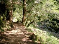 Sendero de Shanlinxi, lleno de árboles y rodeado de paisajes con encanto.