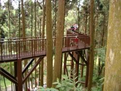 Pasarela a 20 metros sobre el suelo, experimentando la sensación de caminar entre los troncos y las ramas.