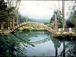 Famoso puente de la Universidad en Xitou hecho de Bambú.