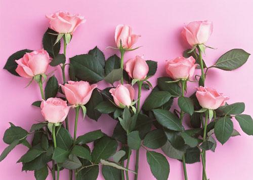 Diez rosas: