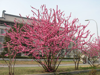 flores en China
