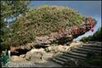 La piedra en forma de tortuga